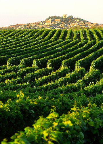 Vineyards and the medieval hilltop village of Sancerre, central France