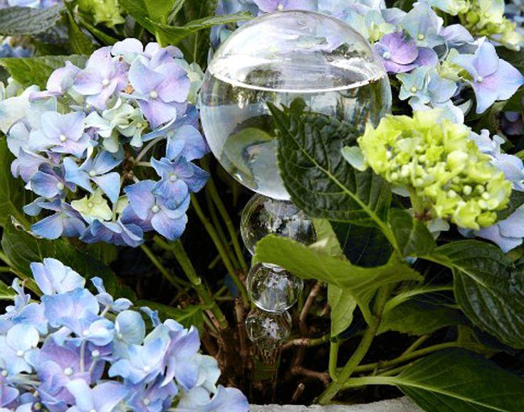 Självbevattnare KULA blomvattnare i Glas