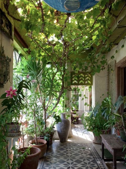 This vine pergola is exactly what I want, but growing such a vine is not for the impatient. I have had my plants in the ground for three years and I am only 4ft high.;-(