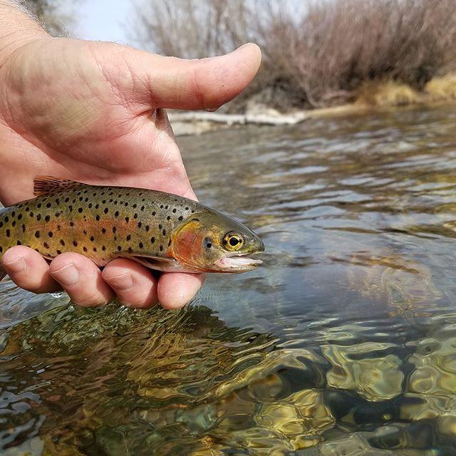 Guided Fly Fishing Trips In Colorado Fish Fishing Trip Fly Fishing