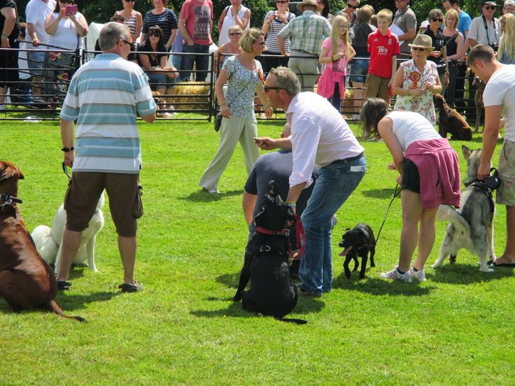 Webkin's World : Trip to Ludlow Dog Day