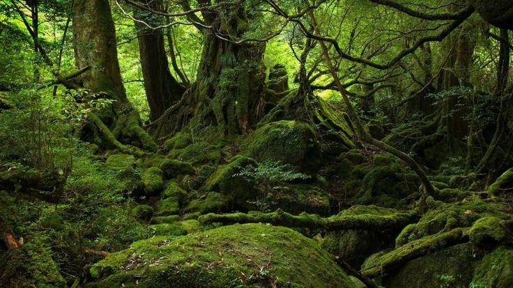 floresta mística