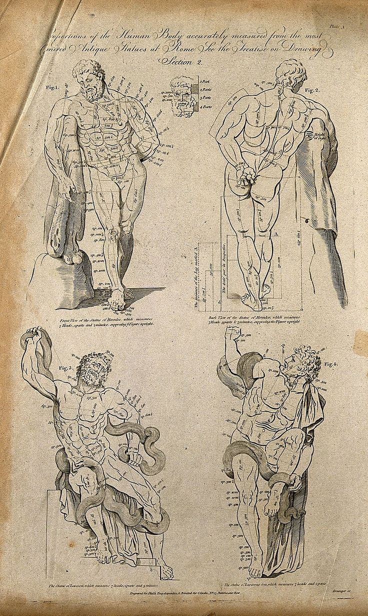 Proportions of the human body; four figures of the classical statues of Hercule of Franese, and Laocoon with proportions marked.  Engraving by W. Grainger, 1788/1795, after G. Audran. Iconongraphic Collections Keywords