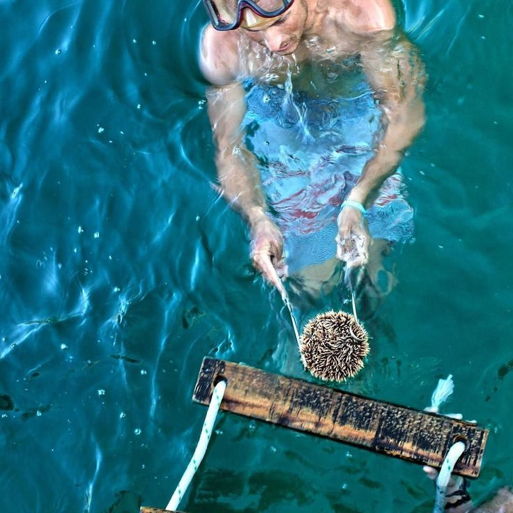 Captain Joey bringing up a sea urchin for guests to get a better look at. Don't worry we returned him home safe I the sea floor!  #centralamerica #travel #canonphotography #sailing #sanjuandelsur #surf #sailboat #sailzone #staysalty #ocean #boats #yacht #yachtlife #wanderlust #rei1440project #vivalosfunhogs #getoutside #passionpassport #surfing #sharethestoke #adventure #freelivingsociety #canon #travelnicaragua #outdoorlife #discovernicaragua #nicaragua by twoguysadventures