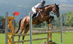 El salto de obstáculos como disciplina ente caballo y jinete - http://www.noticaballos.com/el-salto-de-obstaculos-como-disciplina-ente-caballo-y-jinete.html