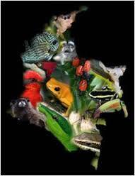 Resultado de imagen para proteccion de fauna y flora en colombia