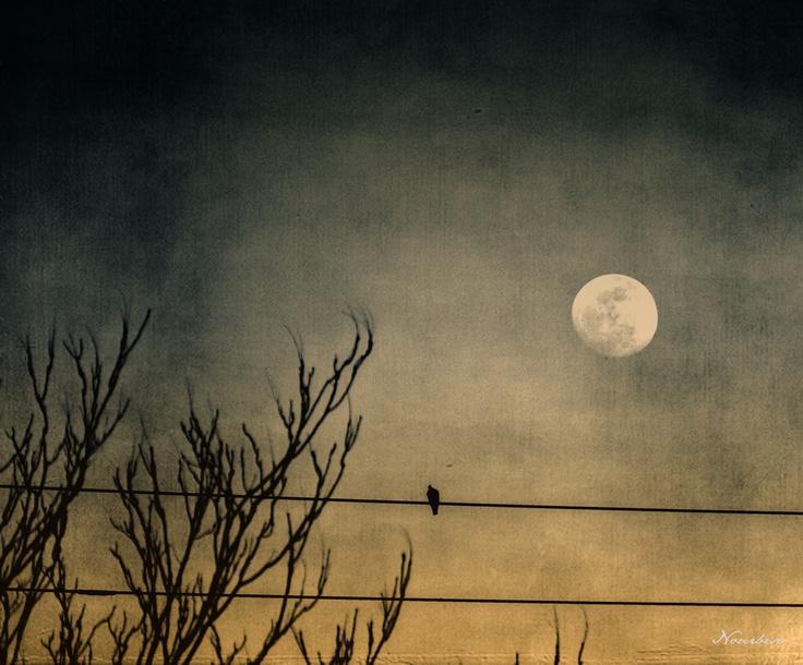 La Luna - The Moon by Marisa Nourbese, via 500px