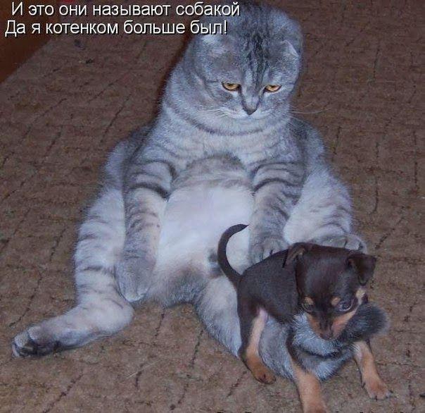 Забавные картинки с кошками
