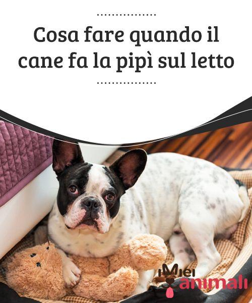 Oltre 25 fantastiche idee su vestiti per cane su pinterest modelli di vestiti per cane - Cane pipi letto ...