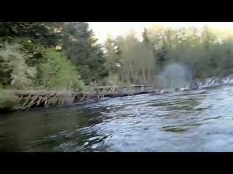 Bald-headed Eagle takes fish right off dude's fly line in an awesome way.