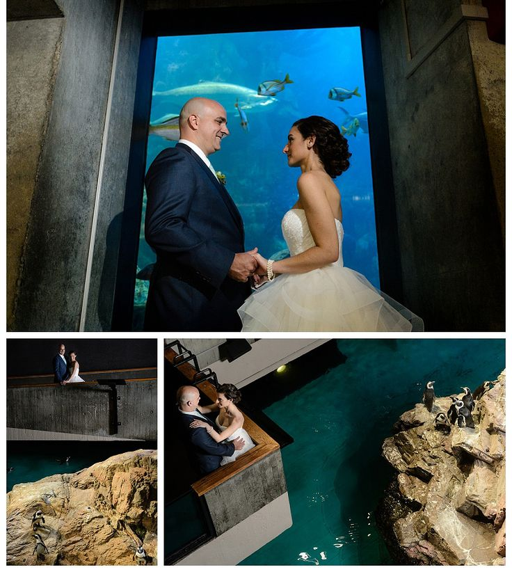 New England Aquarium Wedding Photos Photo Doug Levy Hair By That Moves
