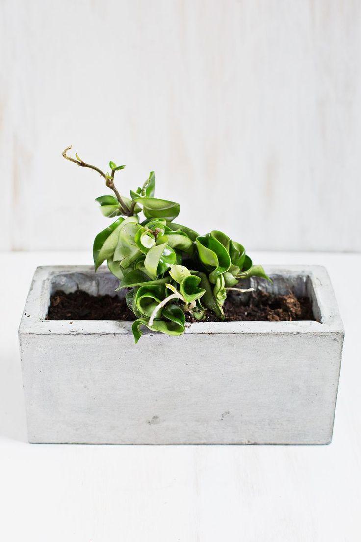 Best 25 hoya plants ideas on pinterest flowering house for Low light non toxic house plants