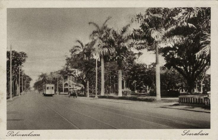 Palmenlaan Soerabaja, ca 1910