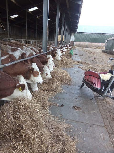 lets get some milk ;-)