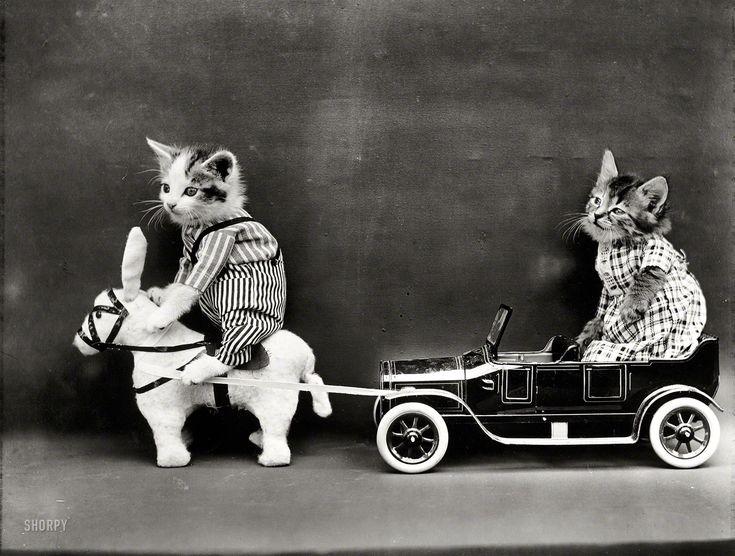 "1914. ""Kitten in costume on mule pulling kitten in toy touring car."" Photo by Harry W. Frees"