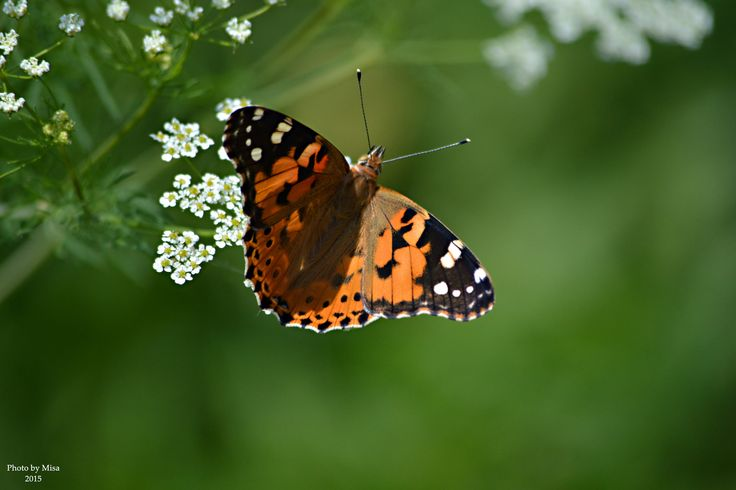 Butterfly by Mihály Metz on 500px