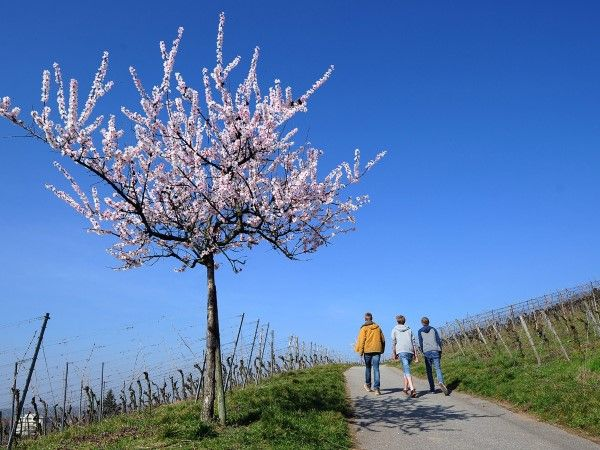 Bensheim, Hesse, Germany (© Daniel Reinhardt/EPA/Corbis)