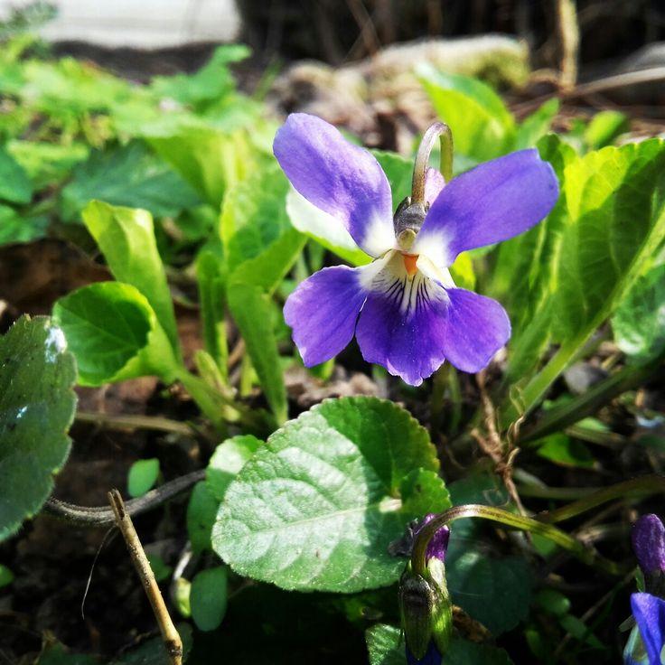 Spring flower!! #spring #flower #flowers #springflower #artistic #artisticphoto #photo #artisticphotos #photos