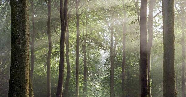 Just Pinned to Forests: Buckholt Wood Cranham Gloucestershire England shot by Rob Wolstenholme http://ift.tt/2wbZaW9