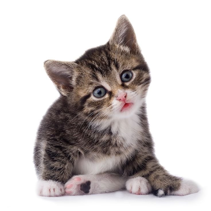 Dealing With Dog Aggression Towards Cats