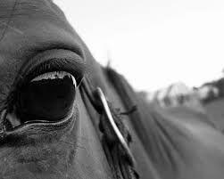 Estudiante muere al chocar su motor con caballo - Cachicha.com