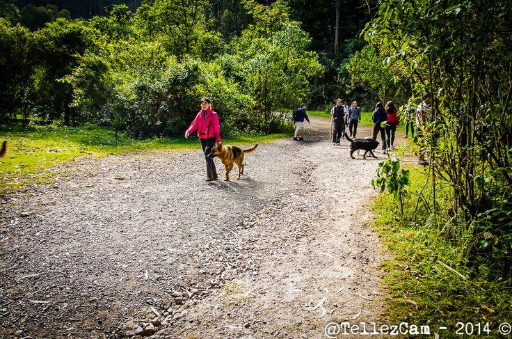 Senderos amplios y seguros, ideales para pasear con tu mascota. Quebrada la Vieja - #Bogotá.