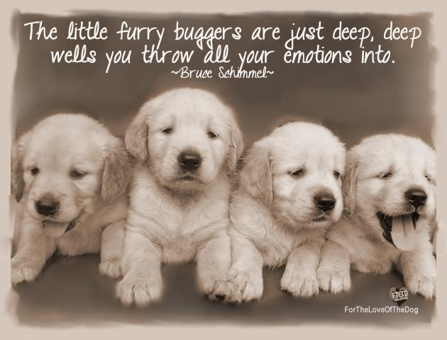 : Treats Bags, Animal Shelters, Dogs, Pet, Puppies Training, Puppy, Labs Puppies, Caramel Apples, Golden Retriever