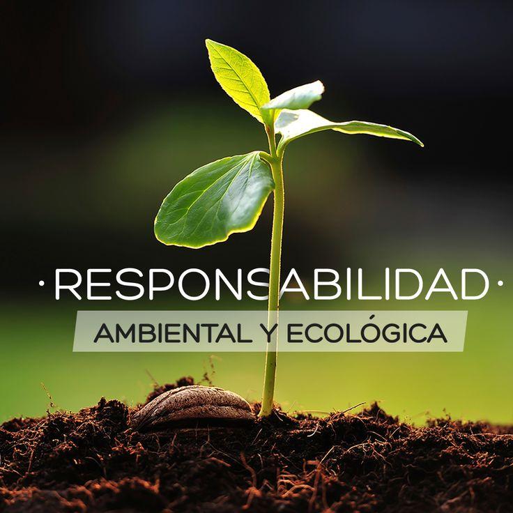 Consorcio Agroriente respetando nuestra filosofía de Responsabilidad Ambiental y Ecológica y enmarcado en acuerdos, convenios y tratados internacionales, promueve la deforestación y reforestación con especies autóctonas con Certificaciones Internacionales #forestal #ambiente #proyectos