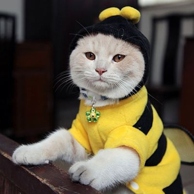 I have all the latest Buzzzz!! Pet Cat Costumes