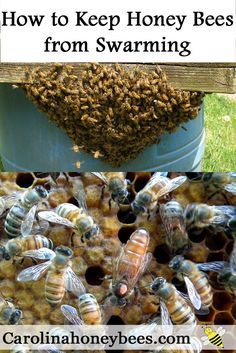How can you keep honey bees from swarming? Beekeepers work each year to minimize swarming. via @https://www.pinterest.com/carolinahoneyb