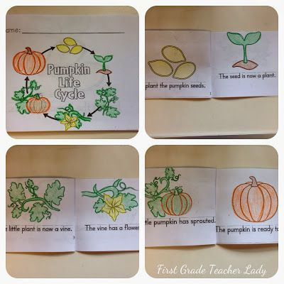 Life cycle of a pumpkin - FREEBIE! First Grade Teacher Lady
