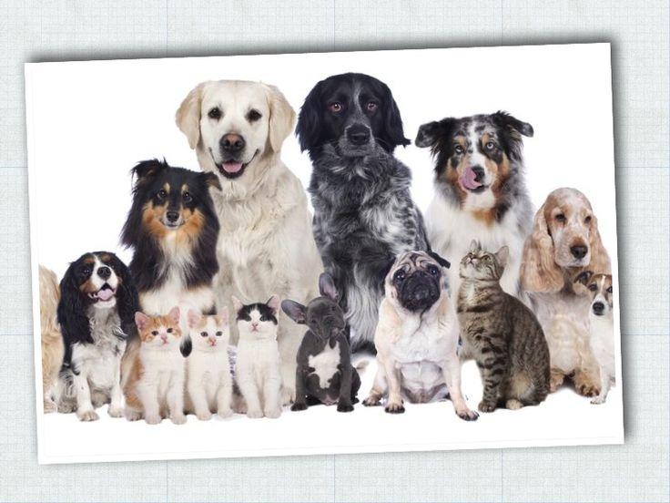 Fundación para adoptar perros y gatos.