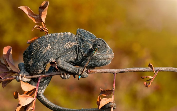 Download wallpapers chameleon, reptile, autumn, dragonfly, branch