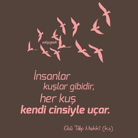 """""""İnsanlar kuşlar gibidir,  her kuş kendi cinsiyle uçar.""""   Ebû Tâlip Mekkî (k.s) #tasavvuf"""