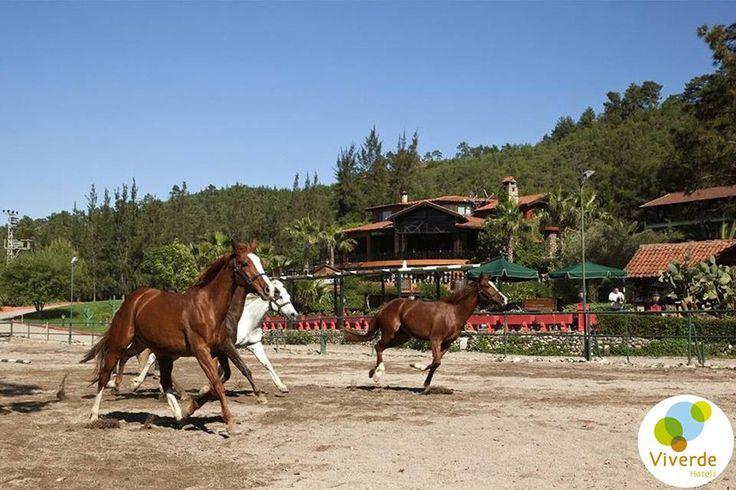 Huzur dolu bir tatil sizleri bekliyor. #Viverde #Hotel #Berke #Ranch #Kemer