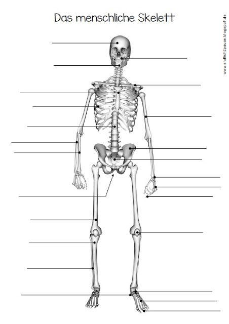 endlich pause 2 0 ab zum skelett schule sachunterricht pinterest suche und bauchmuskeln. Black Bedroom Furniture Sets. Home Design Ideas