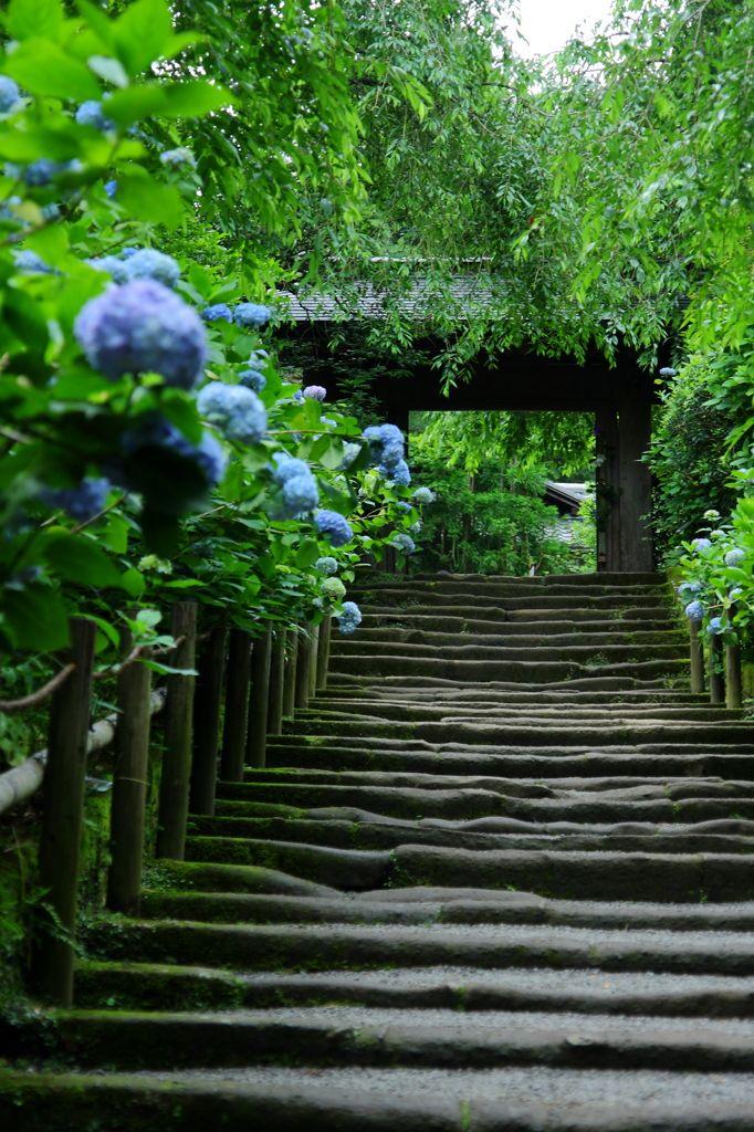 明月院 Kamakura, Japan