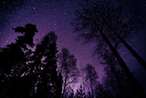 *Starry Sky, Dreams, Night Skies, Starry Night, Stars, Night Night, Inspiration Pictures, Night Sky Photography, Purple Sky