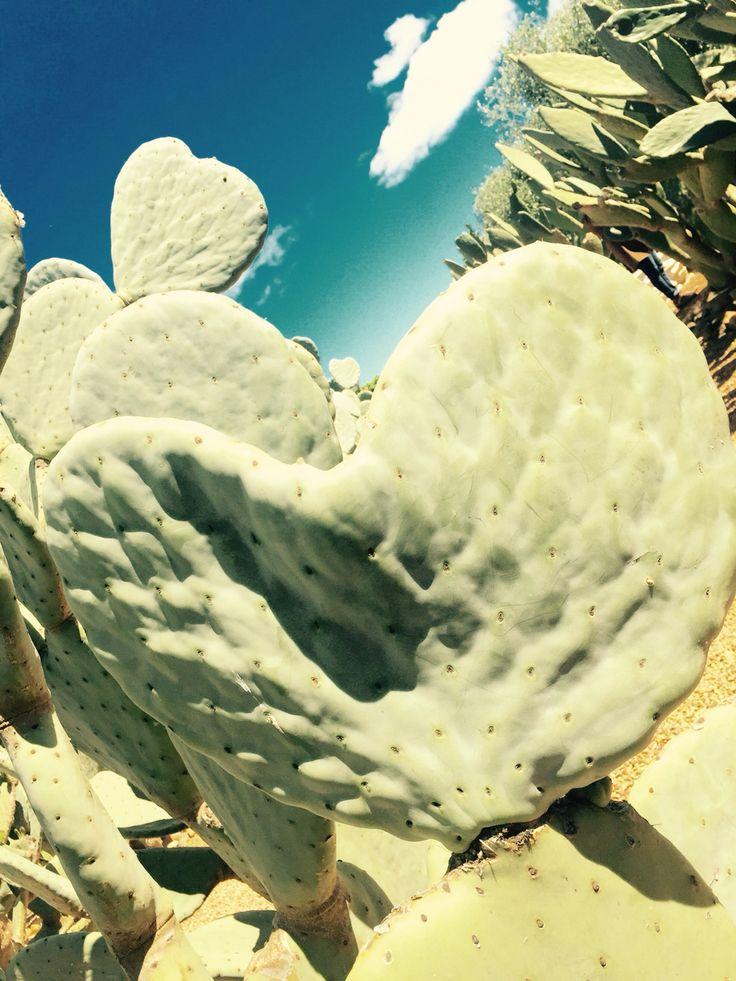 Cactus love 2