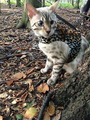 Cat Kitten Harness