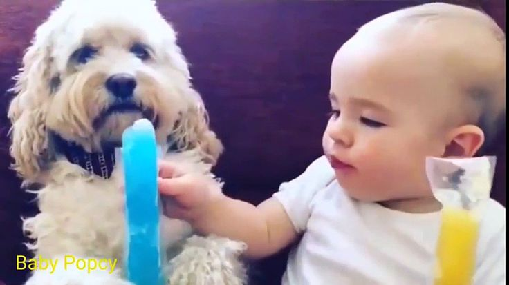 Funny Baby Eating ★ Kids Funny Videos ★ Funny Videos for Kids - http://trynotlaughs.us/funny-baby-eating-%e2%98%85-kids-funny-videos-%e2%98%85-funny-videos-for-kids/