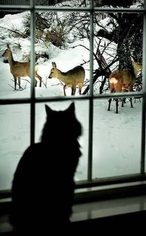 What a view.. | #deers #window #amazing