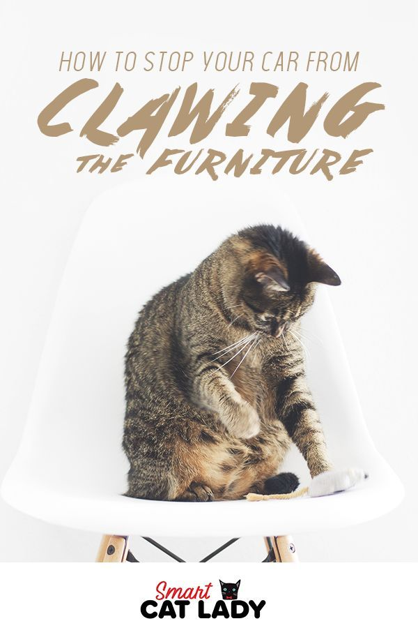 Strange How To Stop Your Cat From Clawing From Furniture House Cat Home Remodeling Inspirations Cosmcuboardxyz