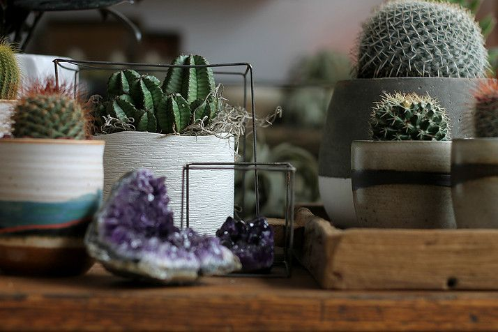 Potted cacti and succulents