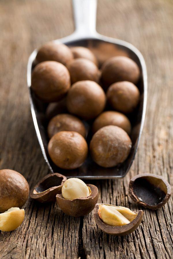 Pin By John Zumpano On Information Chocolate Macadamia Nuts Xylitol Liver Failure