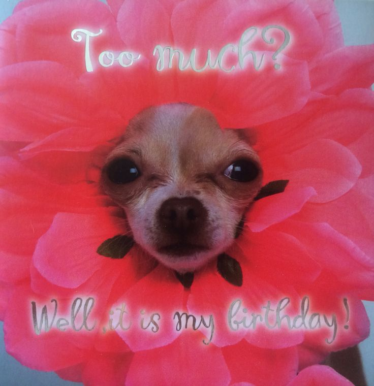 #dog #birthday #flower #funny #cute