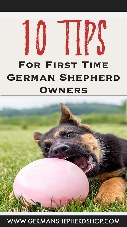 Tips For First Time German Shepherd Owners German Shepherd
