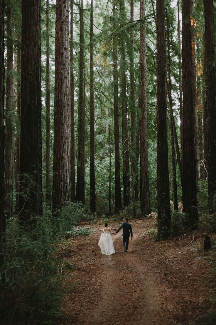 You could get that look in the Red Woods in havelock north NZ