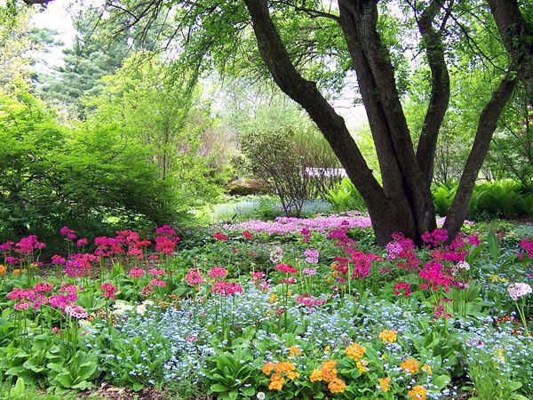 90 Best Images About New England Flowers Gardens On