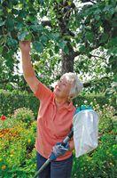 Høsting av epler og pærer - Oktober, Høst, Frukt, Frukthage, Epler, Pærer